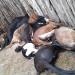 Raio mata ovelhas e garrotes em fazenda no interior do Estado